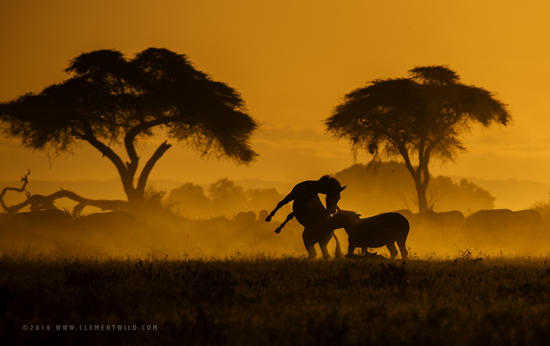 Photographic Safaris, Wildlife Photography