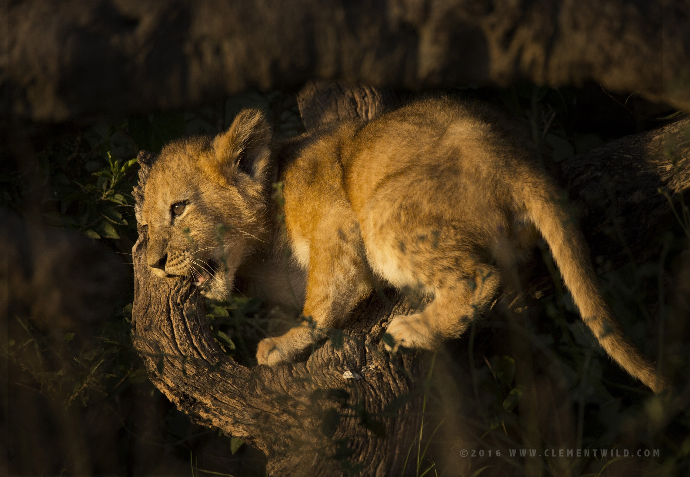 Big Cats, Cheetahs, Masai Mara, Kenya, Wildlife Photography, Photographic Safaris, Clement Wild