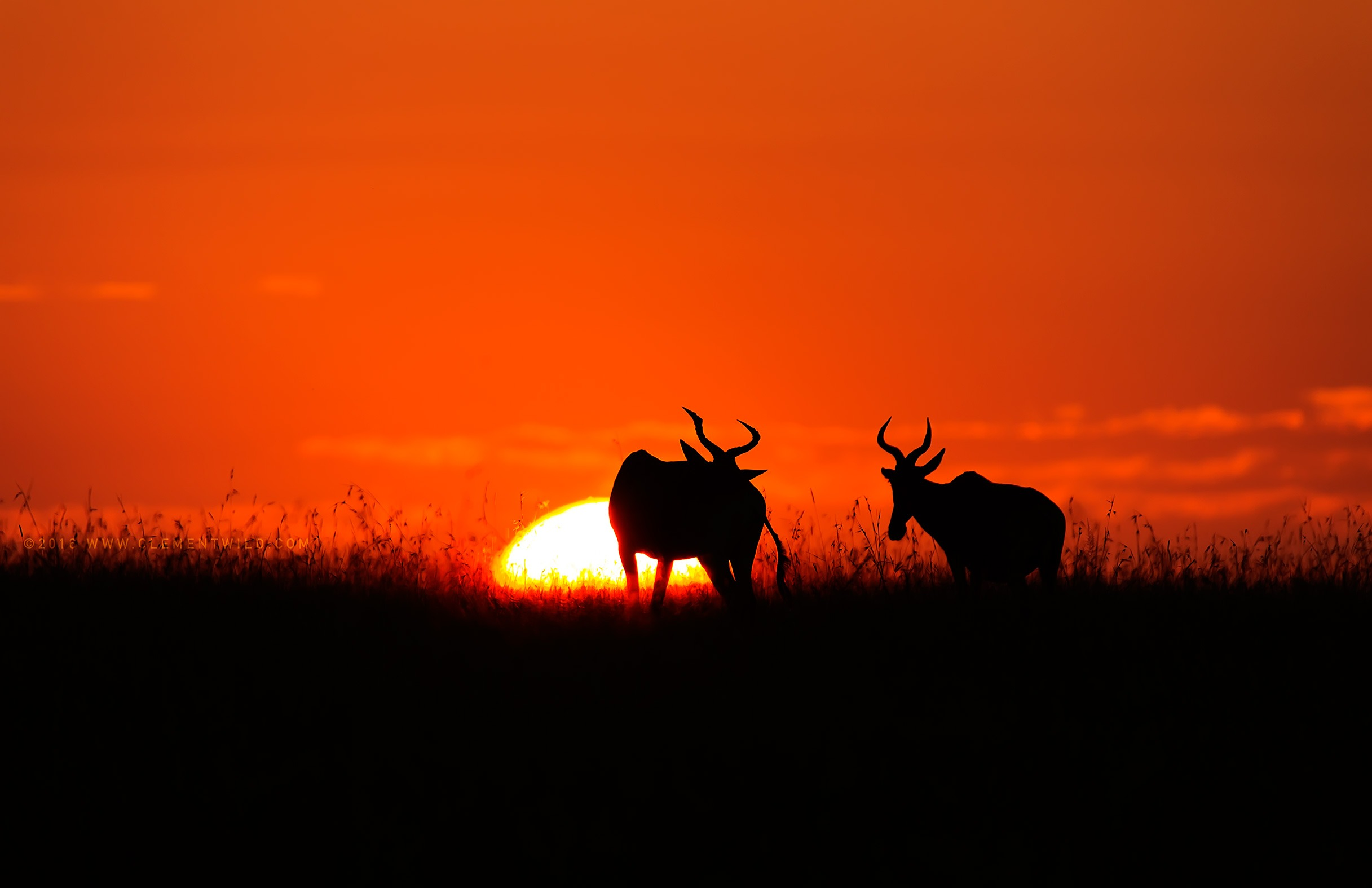 The Mara Sunset, Wildlife Photography, Photographic Safaris, Clement Wild, Masai Mara, Golden Light
