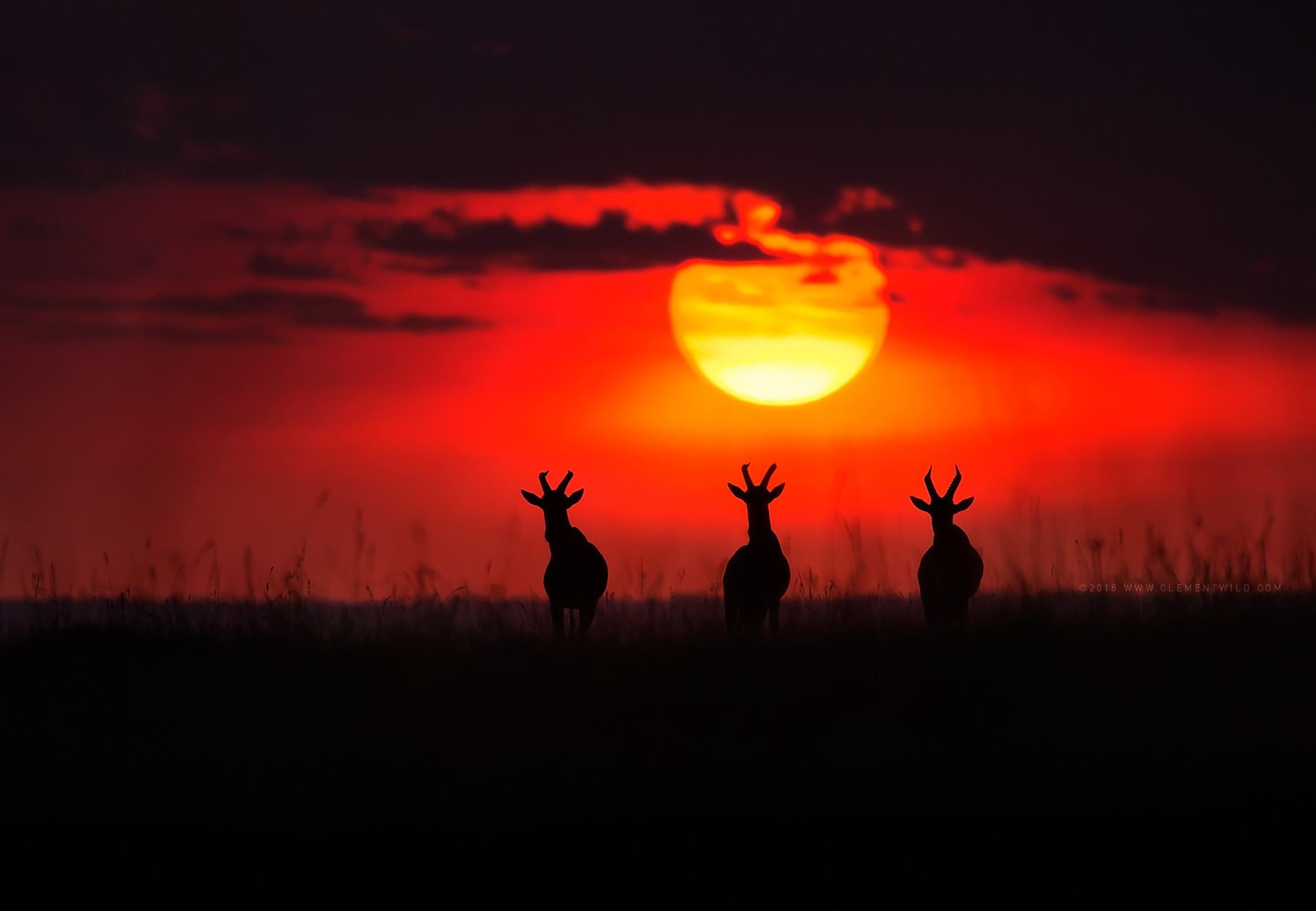Rare Moments, Wildlife Photography, Photo Safaris, Kenya Sunset, Golden Light, Clement Wild, Clement Kiragu, Masai Mara, Nairobi, Kenya Safari
