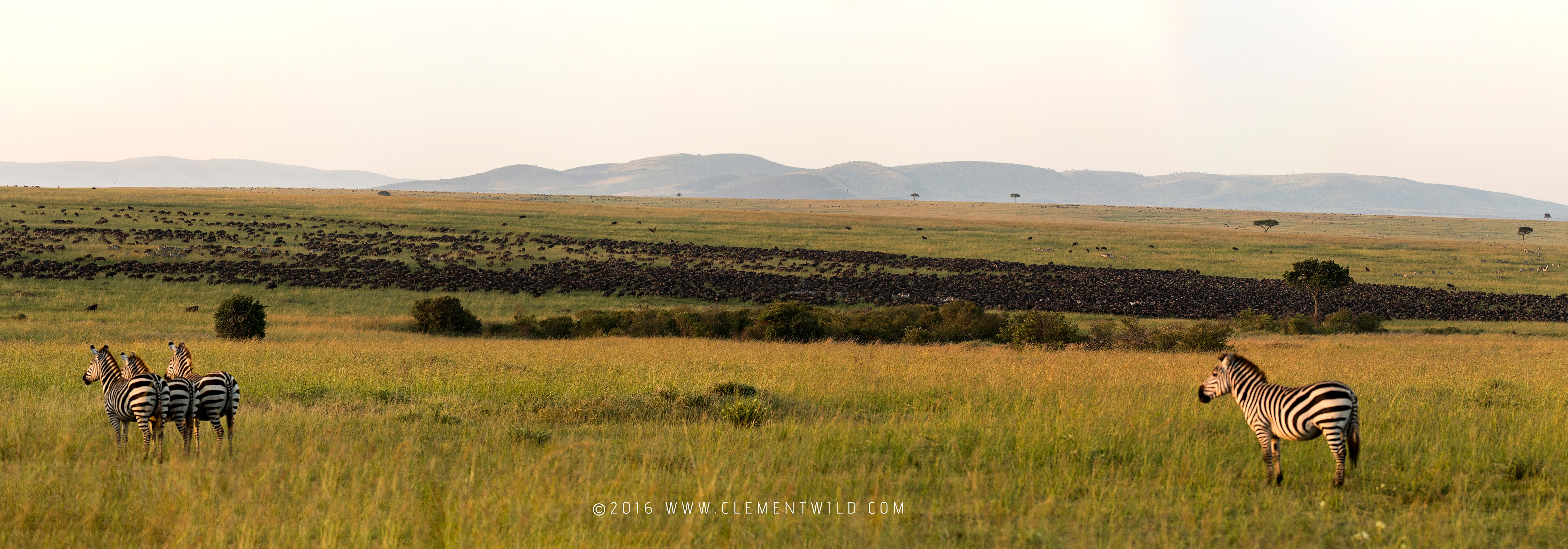 Herds-Panorama Great Wildebeest Migration, Wildlife Photography, Photographic Safaris, Clement Wild, Masai Mara