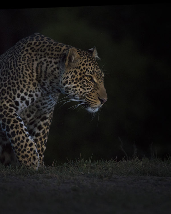 Clement Kiragu Photography - Wildlife Photography - Big Cats