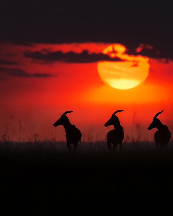 Clement Kiragu - Wildlife Photography - Sunset