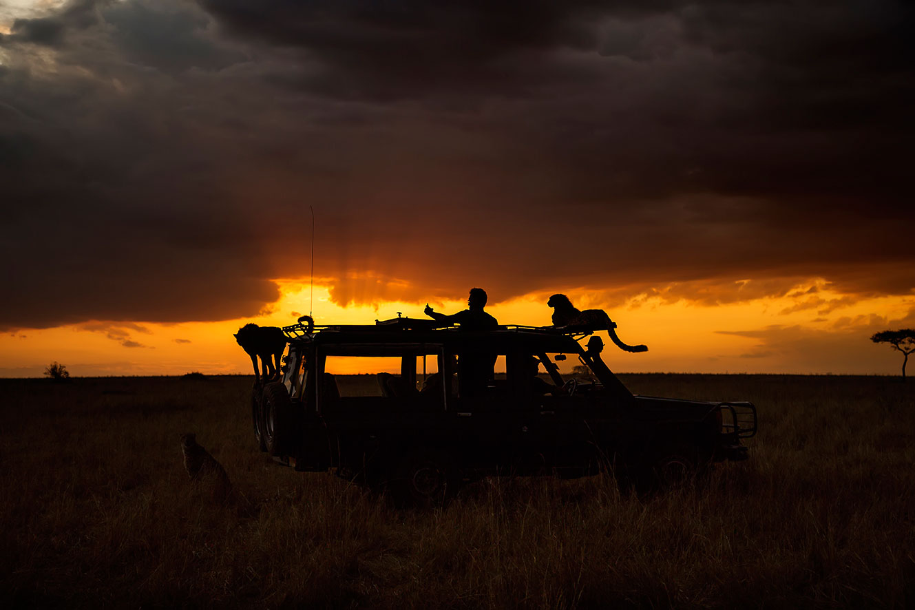 Silhouette of tourists taking a selfie with cheetah on top of a safari jeep at sunset as captured by wildlife photographer clement kiragu