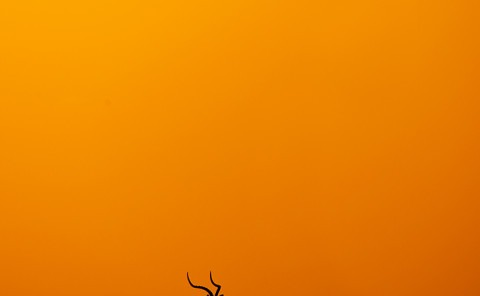 Silhouette of an Impala in Maasai mara as captured by wildlife photographer Clement Wild