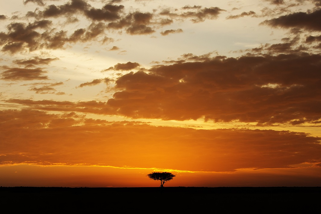 Silhouette of a tree with golden clouds in the sky as the sun sets in Maasai mara