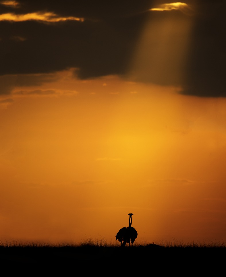 Silhouette of two ostriches in Maasai mara as captured by photo tour leader ClementWild