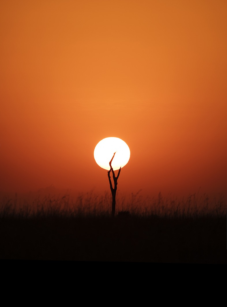 Silhouette of the sun and a dry tree forming a shape of a night stand lamp as captured by photo tour leader ClementWild