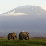 Photo of two elephants with the backdrop of Mt Kilimanjaro photographed by Clement Kiragu