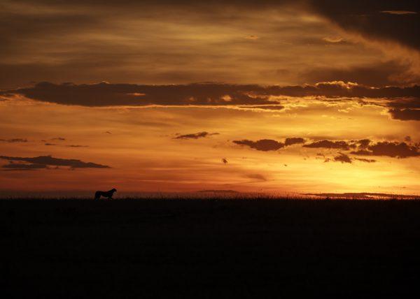 Silhouette of a cheetah in Maasai Mara