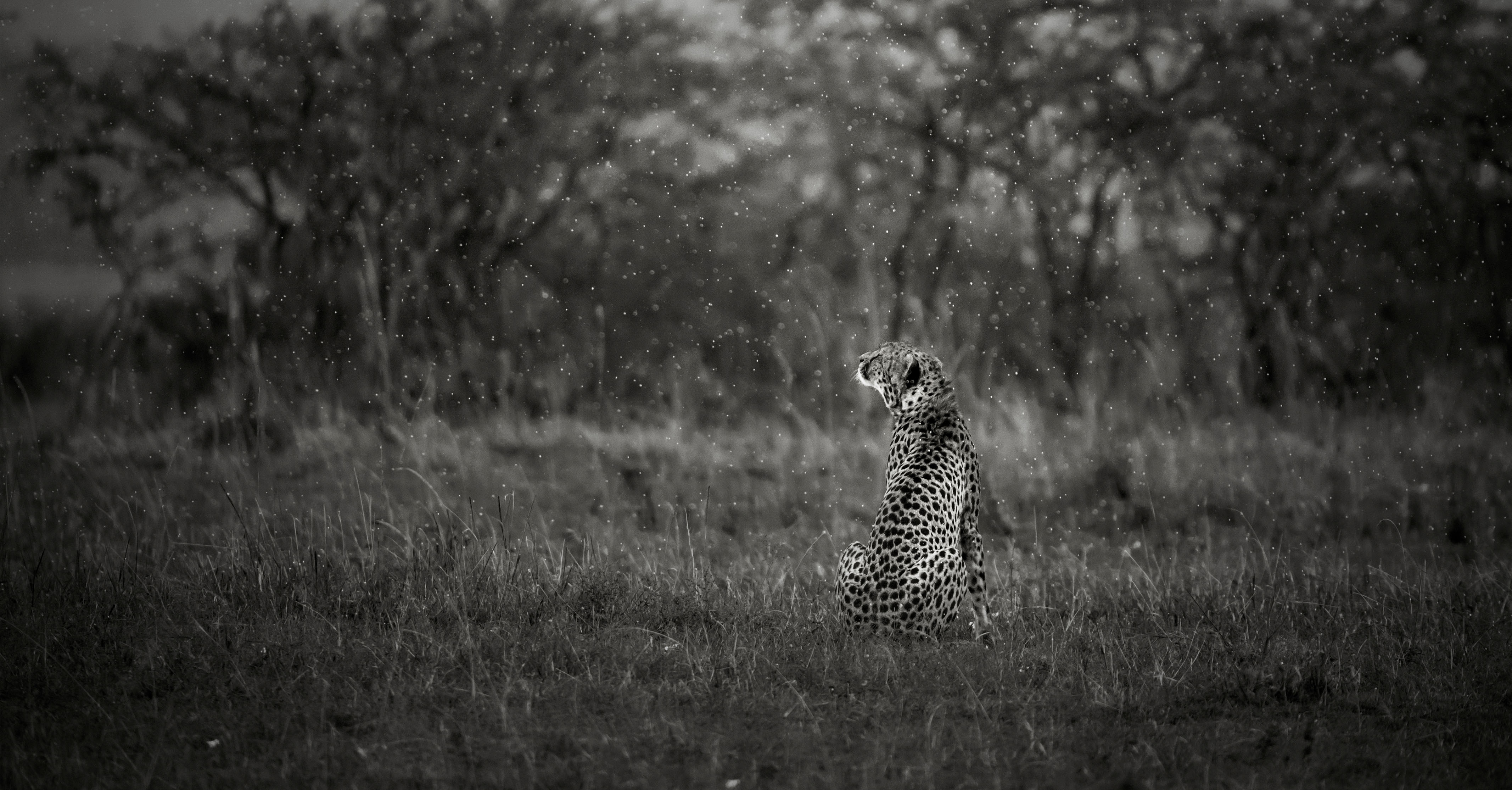 Malaika's cub in heavy rain as captured by photo tour leader ClementWild