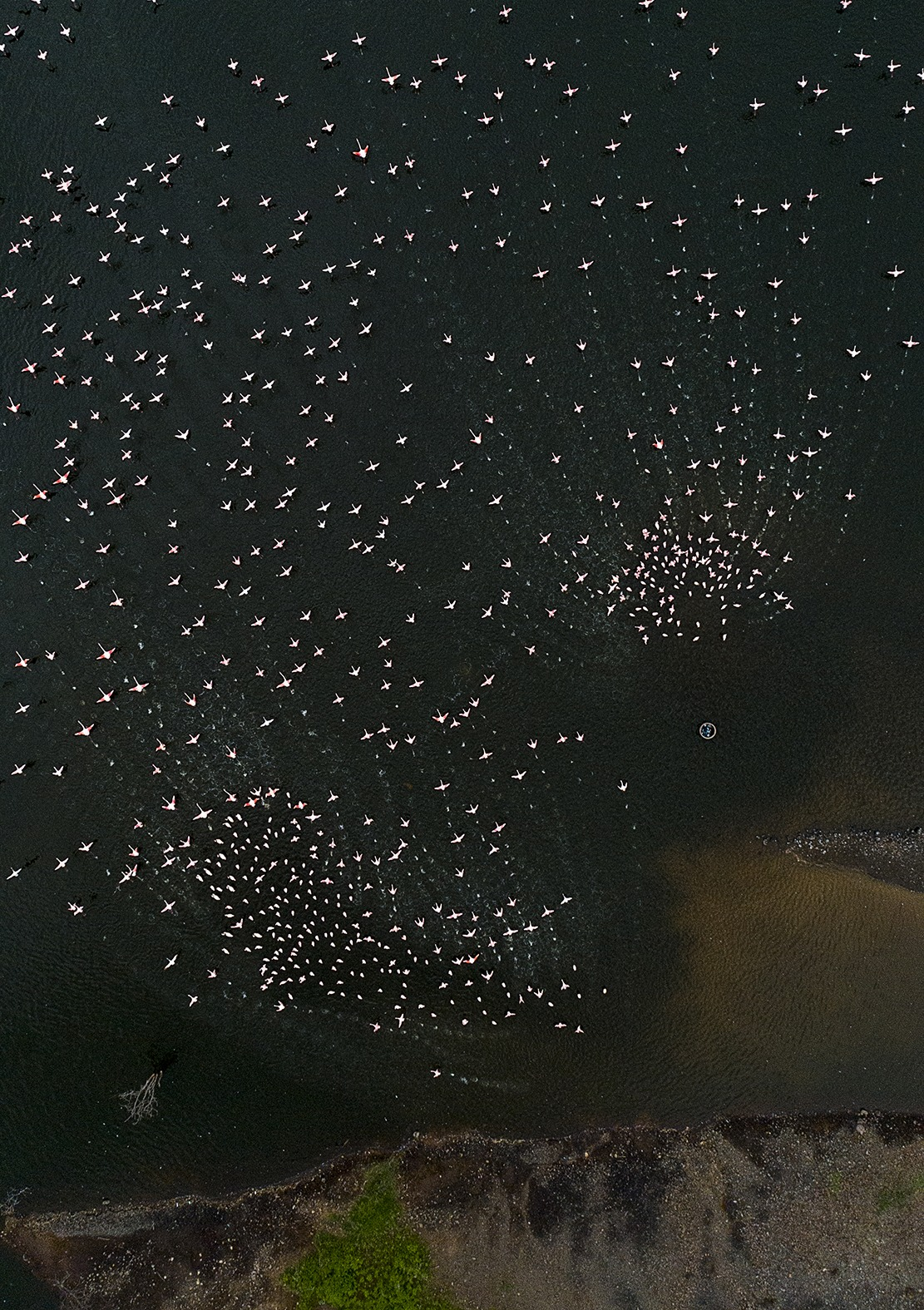 Aerial shot of flamingos in flight on a ClementWild Bogoria Photo Safari