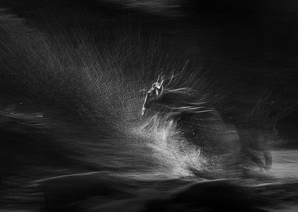 Panning shot of wildebeest crossing Mara River captured by ClementWIld